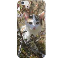 Cabunny on Blossom Tree iPhone Case/Skin