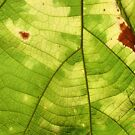"leaf *featured in group ""natural textures* by sneha"