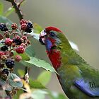 Rosella-Berry Kisses by WendyJC