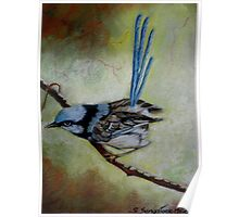 """Blue Wren  """"Perfect View""""  SOLD Poster"""