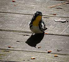 Inquisitive Bird by AlixCollins