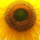 Sun Flower by soulfocus