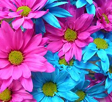 Blue and Pink Daisies Bouquet by MoxieNox