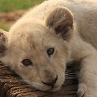 White Lion cub by Keith Jones