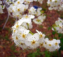 Spring Blossoms II by DottieDees