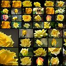 50 Yellow Roses by Donna Adamski