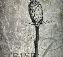 Teasel by cdwork