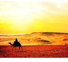 Morocco, camel in the desert by MarcoSaracco