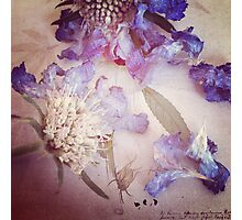 Purple Haze - Botanical Photographic Print
