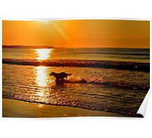Sunrise Playtime Poster