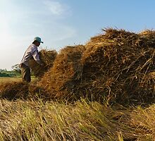 Straw collecting by ZorroTran