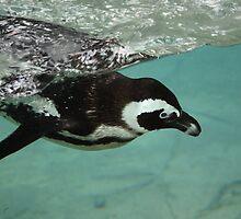 penguin by tshobe