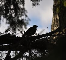 Silhouetted Robin on the sky by TheKoopaBros