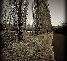 The road not taken by David Petranker
