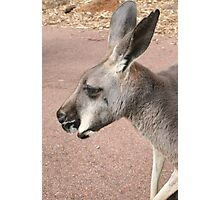 The Bush Kangaroo Photographic Print