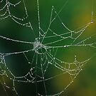 Jeweled Web by mklue