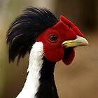 Silver Pheasant by Tamara  Kenneally