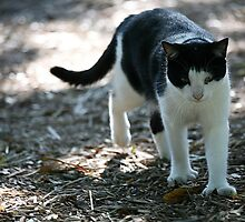 Hemingway cat by Fran0723