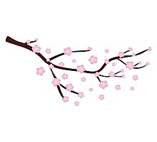 Blooming Sakura Branch 3 Photographic Print