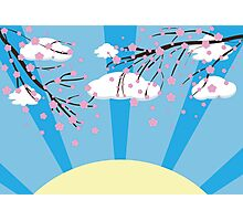 Blooming Sakura Branches Photographic Print