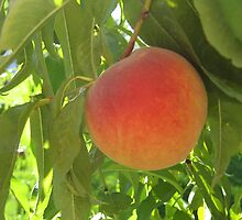 Peach by Bellavista2