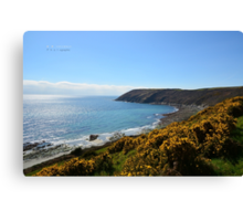 """ Yellow Gorse, Turquoise Sea "" Canvas Print"