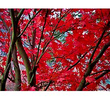 crimson fall Photographic Print