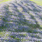 Roadside Field of Bluebonnets by Navigator