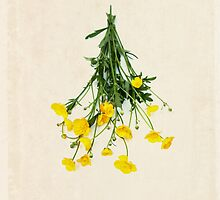 Yellow Wildflower Boquet on Aged Paper by WildPoetry