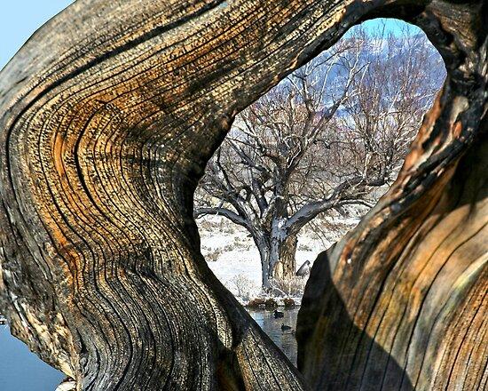 Eye Of Time by Arla M. Ruggles