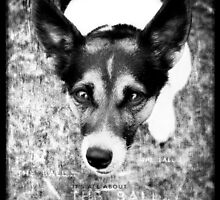 Terrier Obsession: It's All About The Ball - Black and White Remix by Jay Taylor