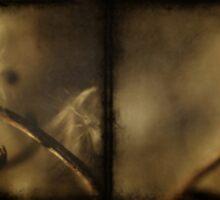 Primavera by Marko Beslac