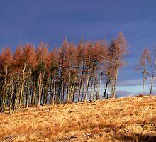 Tree line by Douglas Robertson