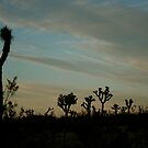 Joshua Tree Sunset by spiderhouse