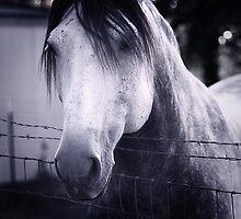 White Whisperer by Trish Mistric