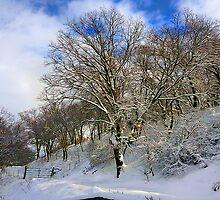 Winter's Morning by Rod Underhill