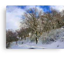 Winter's Morning Canvas Print