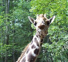 Giraffe Love by ChunkyMonkey88