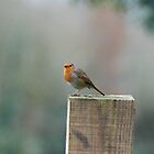 The robin by Joe Cashin