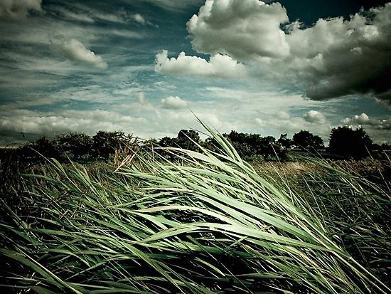 Independent Summer (2004) by Daniel Weisser