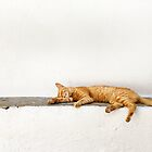one lazy cat by Raymond Capozzi