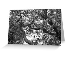 Lost In Branches Greeting Card
