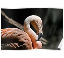 The Sacred Old Flamingoes Poster