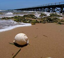 Shell at Beach by Jordography
