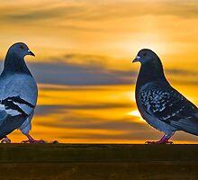 Love Birds by MaahiPhoto