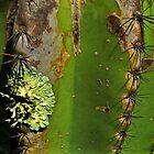 Prickly Pear with Lichen by myraj