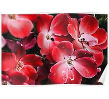 Bright Red Flowers Poster