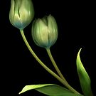 Green Tulips by TheWalkerTouch
