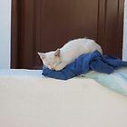 sleeping beauty by korniliak