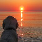 My Golden Retriever Ditte enjoys the sunset  by Trine